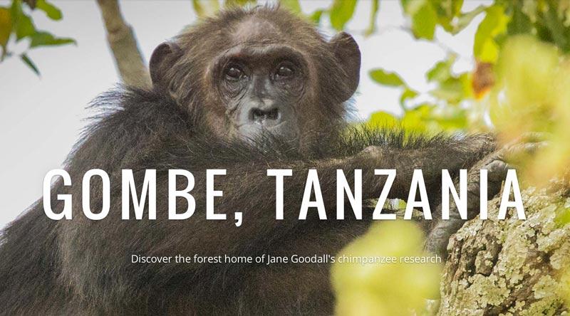 Ahora Google Street View ofrece un maravilloso paseo con chimpancés salvajes