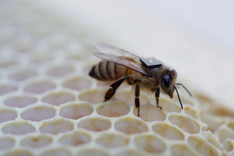 Microsensores de Intel serán colocados en colmenas para comprender que hay detrás de la caída en el número de abejas